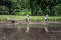 Scena d'agricoltura pittoresca della risaia in Tailandia Fotografia Stock