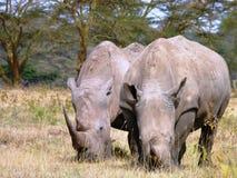 Scena dal Kenya Immagini Stock