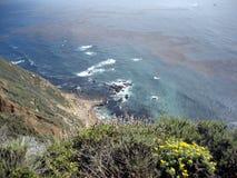 Scena dalla costa di California con i Wildflowers ed il fuco Fotografia Stock