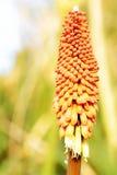 Scena dei fiori e dei fogli nel campo Immagini Stock