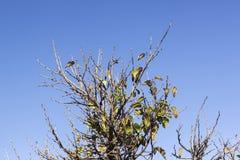 Scena dei rami multipli variopinti degli alberi nella stagione di autunno Immagine Stock Libera da Diritti