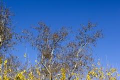 Scena dei rami multipli variopinti degli alberi nella stagione di autunno Fotografia Stock