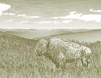 Scena del bisonte dell'intaglio in legno Fotografie Stock Libere da Diritti