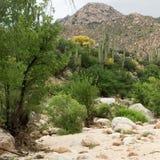 Scena del deserto con la montagna nel fondo Fotografie Stock Libere da Diritti