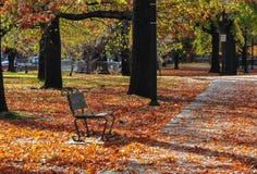 Scena del fogliame di autunno nel parco fotografia stock