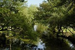 Scena del lago fotografie stock libere da diritti