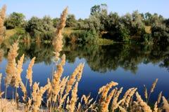 Scena del lago fotografia stock libera da diritti