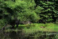 Scena del lago fotografia stock