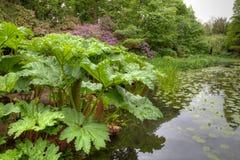 Scena del lago con le piante esotiche Immagini Stock