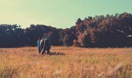Scena del ranch del Texas Fotografie Stock Libere da Diritti