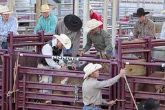 Scena del rodeo. immagine stock