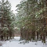 Scena del sentiero nel bosco di inverno Immagine Stock