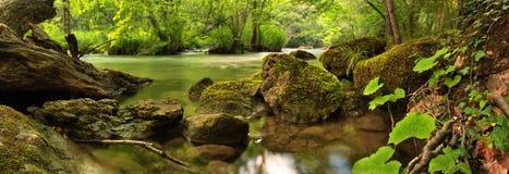 Scena del terreno boscoso Immagine Stock