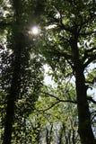 Scena del terreno boscoso Immagine Stock Libera da Diritti