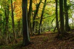 Scena del terreno boscoso Fotografia Stock Libera da Diritti