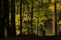 Scena del terreno boscoso Fotografia Stock
