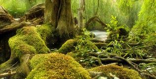 Scena del terreno boscoso con il fiume nella foresta Fotografia Stock