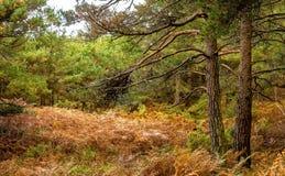 Scena del terreno boscoso di autunno Fotografia Stock Libera da Diritti