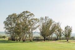 Scena dell'azienda agricola di primo mattino alla montagna di Koranna vicino a truciolo Immagine Stock Libera da Diritti