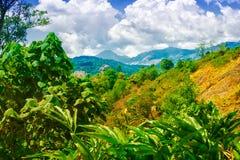 Scena dell'India con le colline, il cardamomo verde delle piantagioni e la s blu Immagine Stock