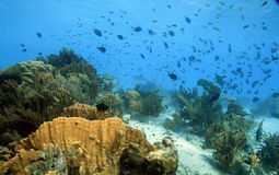 Scena della barriera corallina Fotografie Stock Libere da Diritti