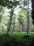 Scena della foresta Immagine Stock Libera da Diritti