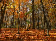 Scena della foresta di autunno fotografia stock