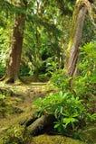 Scena della foresta in Kerry Irlanda Immagine Stock Libera da Diritti