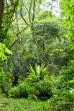 Scena della giungla Immagini Stock