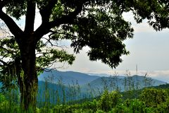 Scena della montagna di Ridge blu - albero della priorità alta Fotografie Stock