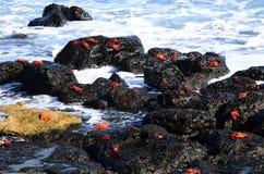 Scena della natura di Galapagos Immagine Stock Libera da Diritti