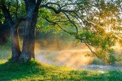 Scena della natura della primavera fotografia stock libera da diritti