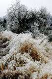 Scena della neve Fotografia Stock Libera da Diritti