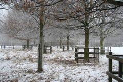 Scena della neve di inverno in Nottinghamshire, Regno Unito. Immagine Stock Libera da Diritti