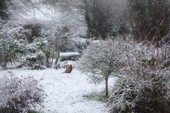Scena della neve della Suffolk immagine stock libera da diritti