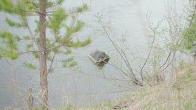 Scena della primavera con la vista al lago attraverso erba azione Paesaggio tranquillo video d archivio