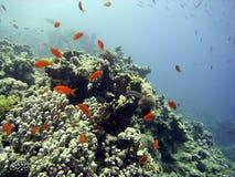 Scena della scogliera con corallo ed i pesci Immagine Stock Libera da Diritti