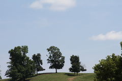 Scena della sommità con gli alberi Fotografie Stock