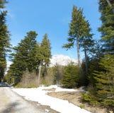 Scena della sorgente nelle alpi Fotografie Stock Libere da Diritti