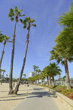 Scena della spiaggia di California del sud con spuma, il Sun e le palme Immagine Stock