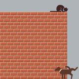 Scena della via con un cane e un gatto Immagine Stock