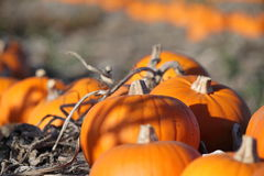 Scena della zucca di autunno Immagine Stock Libera da Diritti