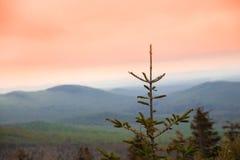 Scena delle montagne di tramonto del pino Fotografia Stock
