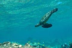 scena denny tropikalny żółw pod wodą Obrazy Royalty Free