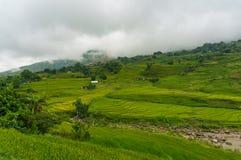 Scena di agricoltura con i terrazzi verdi del riso Fotografie Stock Libere da Diritti