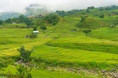 Scena di agricoltura con i terrazzi verdi del riso Immagine Stock