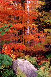 Scena di autunno Fotografie Stock Libere da Diritti