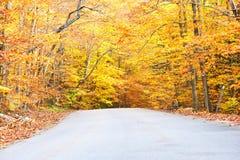 Scena di autunno con la strada Fotografia Stock Libera da Diritti