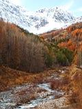 Scena di autunno con neve Fotografia Stock Libera da Diritti