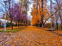 Scena di autunno e nebbia, fondo Fotografia Stock